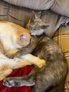 cat buddies - rescued cats