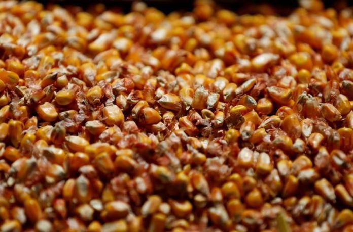 seeds-73489