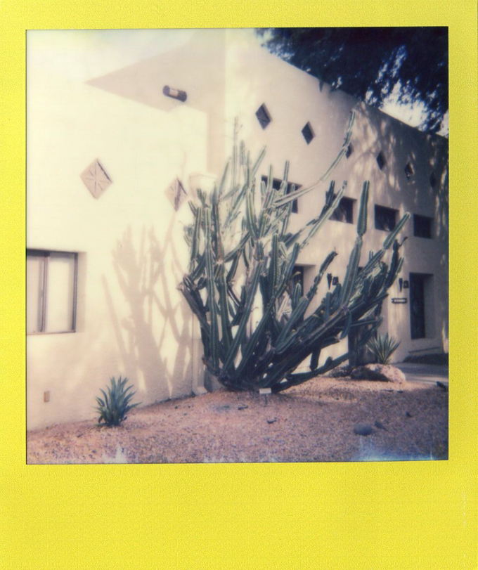 cactus, impossible project, instant film, polaroid