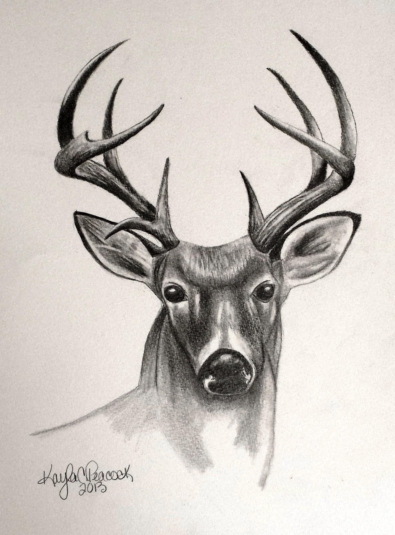deer drawings