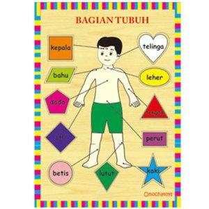 puzzle bagian tubuh - Puzzle Bagian Tubuh Laki-laki