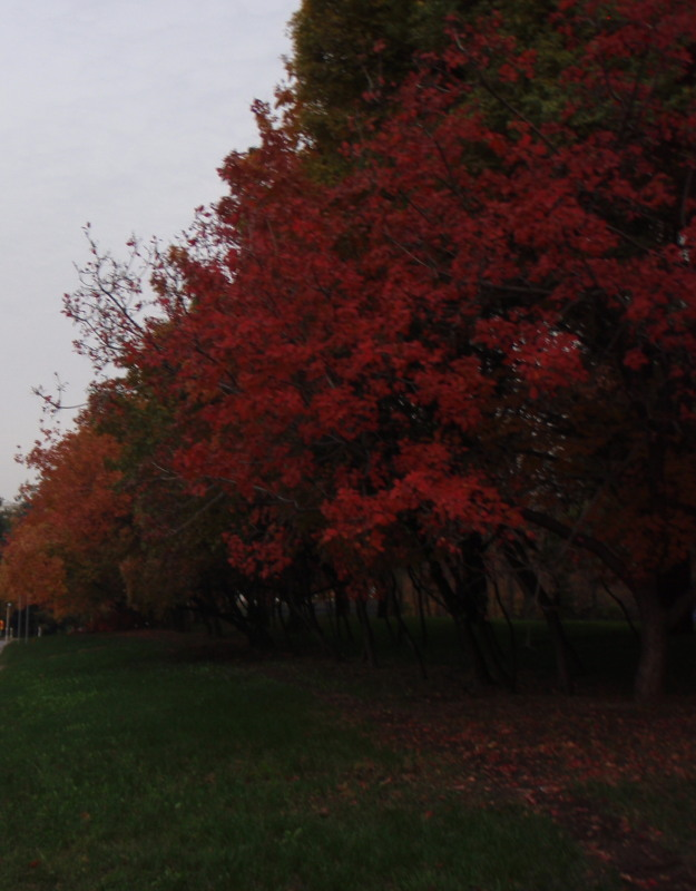 more-fall-leaves