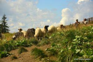 Много овечек...или баранов....неважно.... главное можно считать и заснуть...