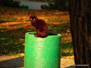 Я кошка сижу на зелёном предмете...