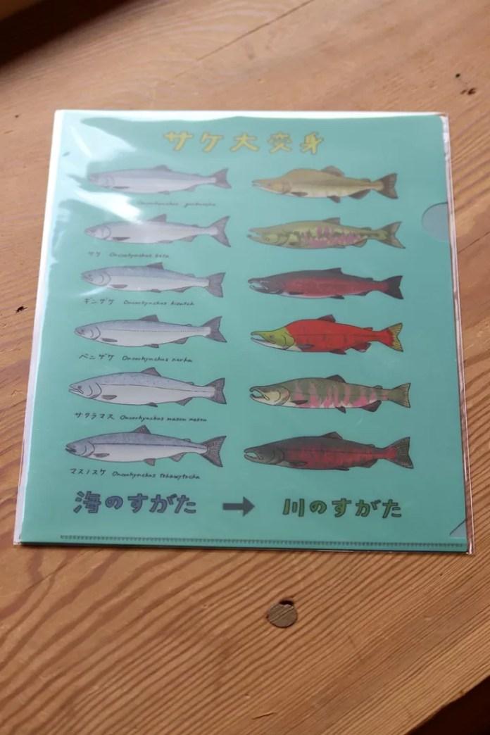 海のサケと川のサケ変身ファイル