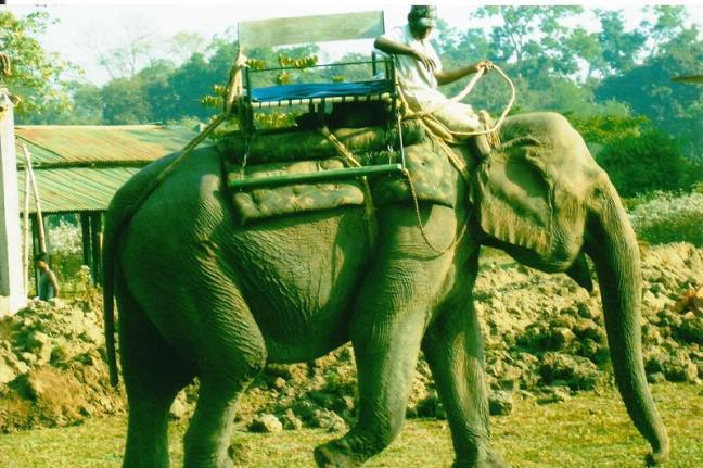 Safari Kaziranga National Park, Rhinoceros Kaziranga Assam