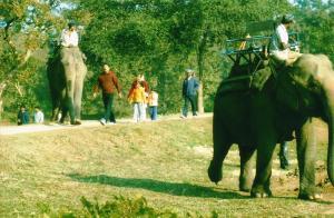 Kaziranga Safari, Jeep Safari Kaziranga, Elephant Safari Kaziranga, Kaziranga Hotels
