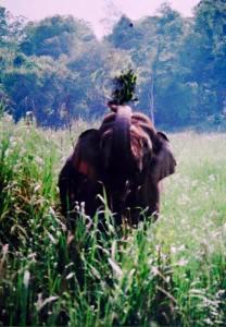 Kaziranga National Park animals, One Horned Rhino Kaziranga, Kaziranga Safari