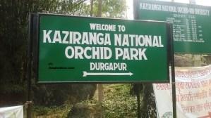 Kaziranga Orchid Park, Kaziranga Jungle Safari, Kaziranga Hotels and Resorts