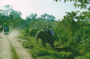 Elephant Safari Kaziranga, Jeep Safari Kaziranga, Kaziranga National Park, Kaziranga