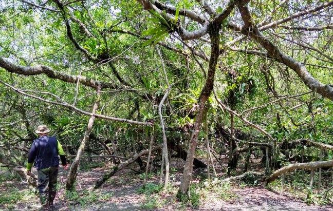 Dibru Saikhowa National Park, Kaziranga National Park, Hotels Dibru Saikhowa