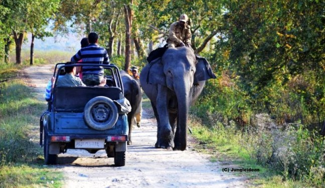 kaziranga safari booking, jeep safari kaziranga, elephant safari kaziranga, kaziranga