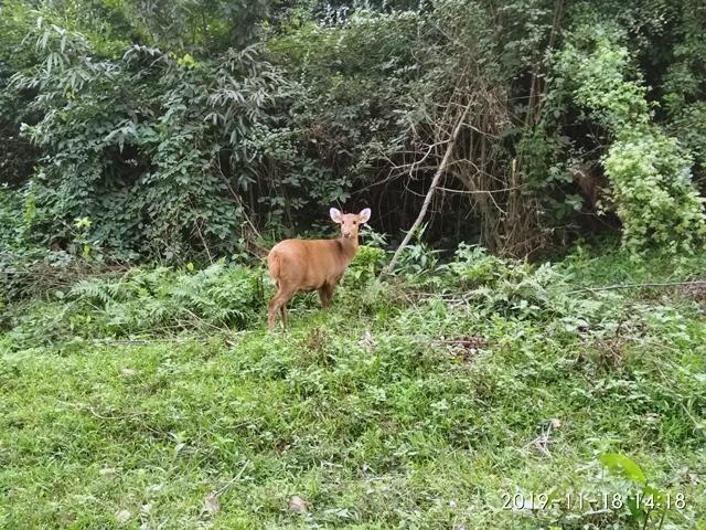Jaldapara National Park, North Bengal Tourism, Dooars tourism, Kaziranga Assam