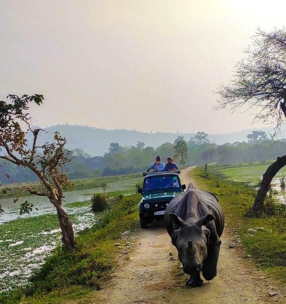 Kaziranga National Park, Kaziranga Safari, Kaziranga Tour, Kaziranga, Kamakhya Temple