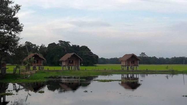 Gibbon Wildlife Sanctuary, Kaziranga National Park, Jorhat, Majuli, Assam Tour
