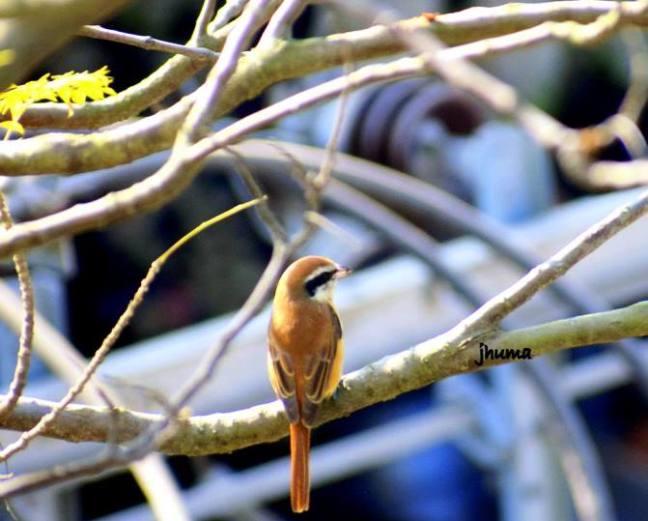 Sundarbans National Park, Sundarbans Safari, Sundarbans Hotels, Kaziranga, Sundarbans Tourism