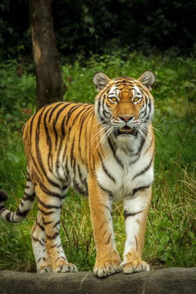 Kanha Tiger Reserve, Kanha Safari, Kanha Hotels, Kaziranga National Park