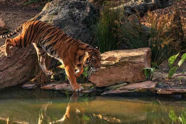 Kanha National Park, Kanha Tiger Reserve, Kanha Safari, Kanha Hotels