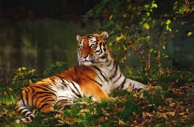 Mudumalai National Park, Madumalai Tiger Reserve, Madumalai Safari, Madumalai Hotels, Tamil Nadu Tourism