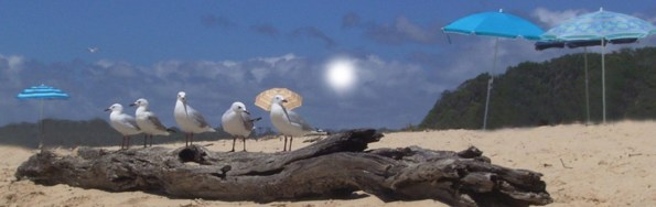 cropped-viewing-seagulls1.jpg