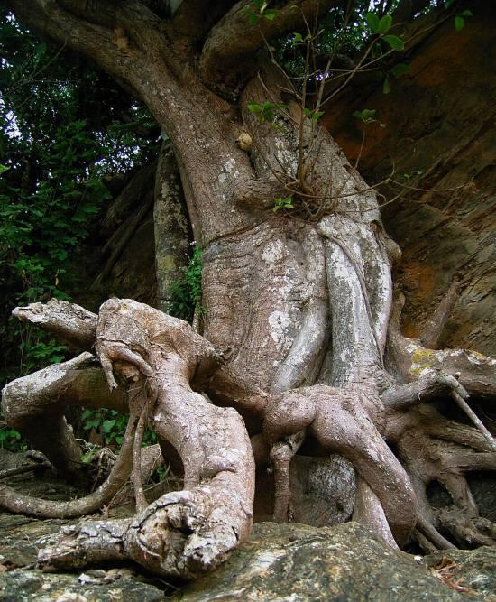 078.12.05 sth valla people tree (1)
