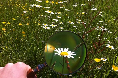 magnifying-glass-479742_640