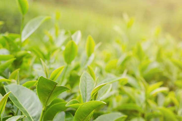 lotiune-benton-deep-green-tea-ceai-verde