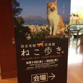 猫好きにはたまらない大阪大丸心斎橋店で開催岩合光昭さん写真展