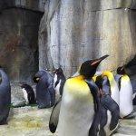うみの杜、室内ライトに照らされるペンギンいい #s_uminomori http://t.co/86amMxlq54