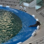 うみの杜、ビーチサイドに上がるイルカ #s_uminomori http://t.co/uGfUbKyZ1Y