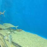 うみの杜、イカがいない水槽(´・ω・`) #s_uminomori http://t.co/wbj2qZww2C