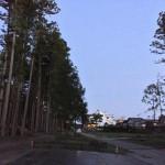 瑞巌寺の杉並木が寂しすぎる http://t.co/Wdief34Lki