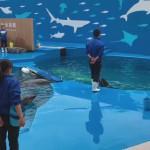 仙台うみの杜水族館、イルカトレーナーの集中力 #s_uminomori https://t.co/2chCsKpHDB