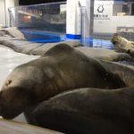 仙台うみの杜水族館、オタリアとゴマフアザラシ集合写真 #s_uminomori https://t.co/mH1uKx88qS