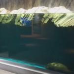 仙台うみの杜水族館、映り込みが激しいバイカルアザラシの水槽 #s_uminomori https://t.co/BKPy9HjUYB