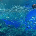 仙台うみの杜水族館、大水槽 タイムプラス #s_uminomori https://t.co/5BVHgnqdRz