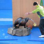 仙台うみの杜水族館、アシカさんのシャボン玉 #s_uminomori https://t.co/aljmsfvA92