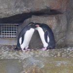 仙台うみの杜水族館、仲良しペンギン? #s_uminomori https://t.co/Tco8ndzI28