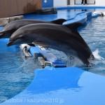 仙台うみの杜水族館、ショーの合間に遊ぶイルカさん #s_uminomori https://t.co/flvjDyrHKB