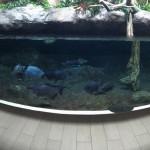 仙台うみの杜水族館、パノラマ写真 https://t.co/L2cMDp9XuN