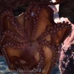 仙台うみの杜水族館、美味しそうなタコさん #s_uminomori https://t.co/JHnBaxA7WW