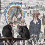 仙台市八木山動物公園、チンパンジー。2月 https://t.co/LcXYevBZEo