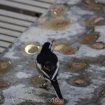 仙台うみの杜水族館、ペンギンのえさを食べる賢い鳥さん #s_uminomori https://t.co/IoLL5RgZpQ