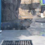 仙台うみの杜水族館、ゴマフアザラシさん #s_uminomori https://t.co/BjDm3C30V0