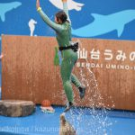 仙台うみの杜水族館、夕方のイルカショーは風が吹くと寒いので注意。 #s_uminomori https://t.co/U8A60A2EdL