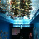 仙台うみの杜水族館、太陽光が降り注ぐマボヤのもり https://t.co/g4aiL5xsJw