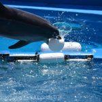 仙台うみの杜水族館、イルカさんの自由時間 https://t.co/596y6IhMDt