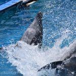 仙台うみの杜水族館、水をかけるイルカさん https://t.co/GbvHT1NYX6