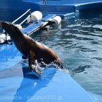 仙台うみの杜水族館、カリフォルニアアシカさん https://t.co/5dWQieHGqx