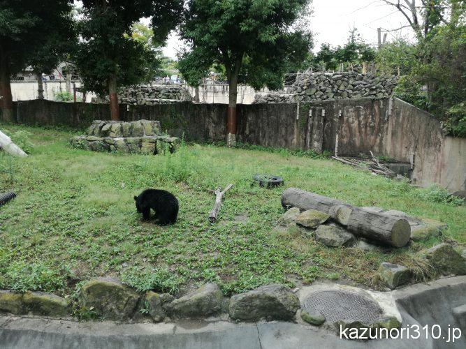 Yagiyama Zoological Park (仙台市八木山動物公園) 小さい熊ならかわいい